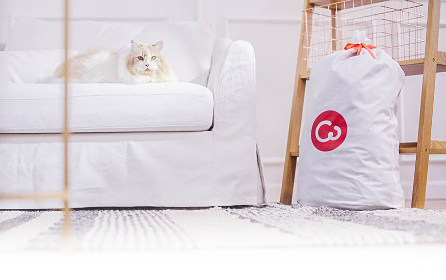 Fat Cat on IKEA Farlov Sofa Slipcover by Comfort Works
