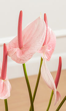 Rose Flower Inspiration Madison Rose Cotton Blends Couch Slipcover Portrait