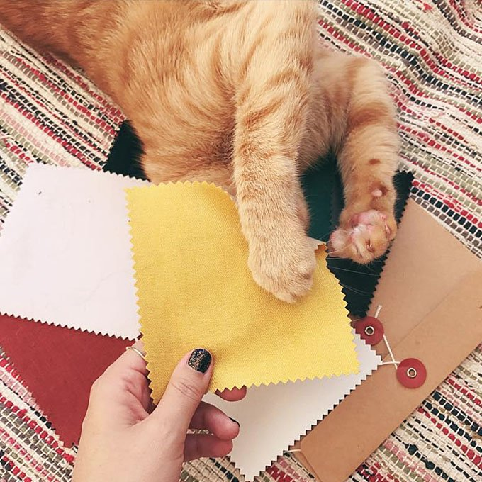 Cat trying some fabric samples