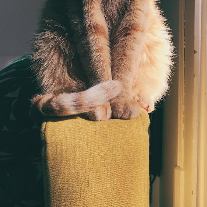 Cat in a sofa armrest