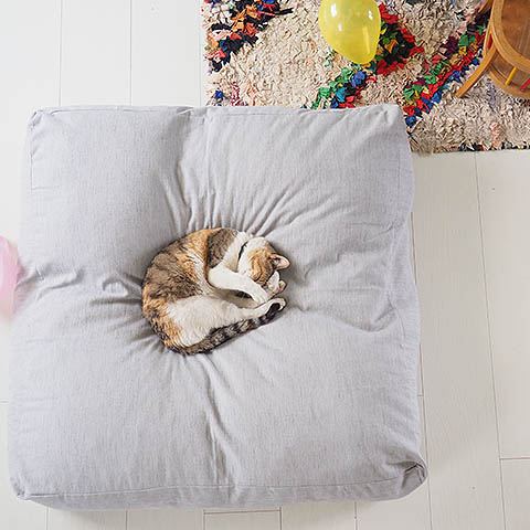 Cat on its own pillow